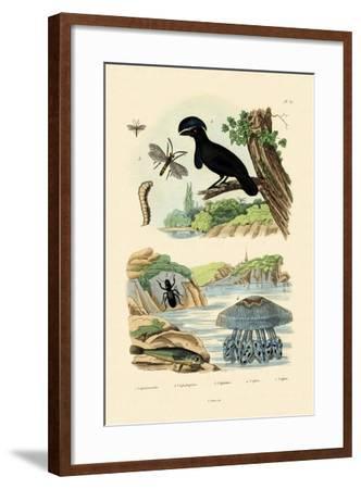 Flying Gurnard, 1833-39--Framed Giclee Print