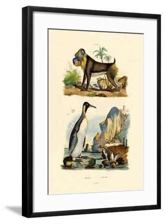 King Penguin, 1833-39--Framed Giclee Print