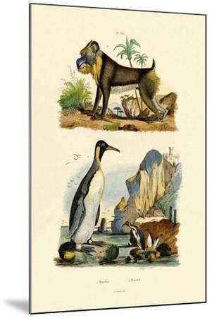 King Penguin, 1833-39--Mounted Giclee Print