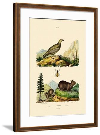 Sardinian Pika, 1833-39--Framed Giclee Print