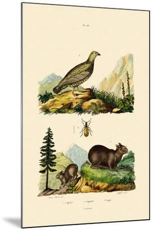 Sardinian Pika, 1833-39--Mounted Giclee Print
