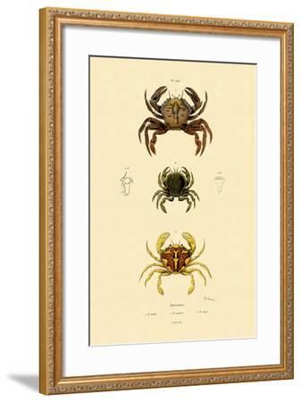 Swimming Crabs, 1833-39--Framed Giclee Print