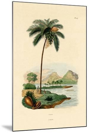 Coconut Palm, 1833-39--Mounted Giclee Print