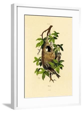 Penduline Tit, 1833-39--Framed Giclee Print