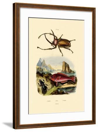 Scarab Beetle, 1833-39--Framed Giclee Print