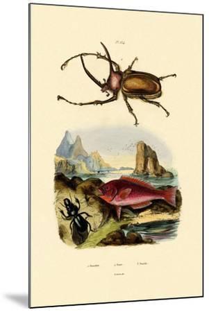 Scarab Beetle, 1833-39--Mounted Giclee Print