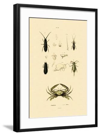 Sentinel Crab, 1833-39--Framed Giclee Print