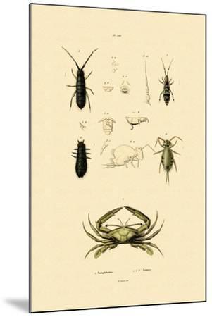 Sentinel Crab, 1833-39--Mounted Giclee Print