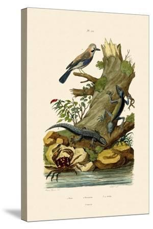 Eurasian Jay, 1833-39--Stretched Canvas Print