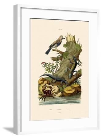 Eurasian Jay, 1833-39--Framed Giclee Print