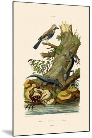 Eurasian Jay, 1833-39--Mounted Giclee Print