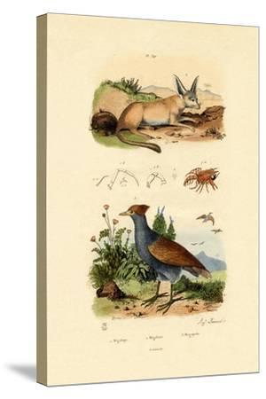 Bat-Eared Fox, 1833-39--Stretched Canvas Print