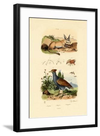 Bat-Eared Fox, 1833-39--Framed Giclee Print