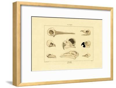 Skulls, 1833-39--Framed Giclee Print