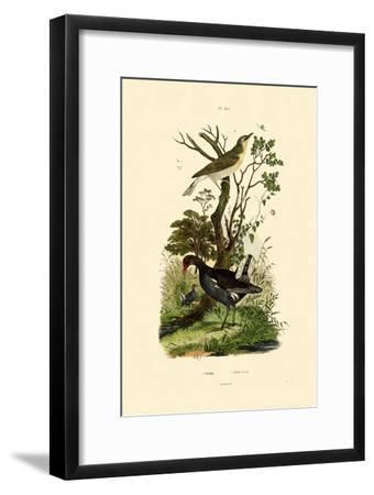 Wood Warbler, 1833-39--Framed Giclee Print