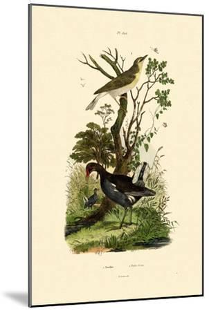 Wood Warbler, 1833-39--Mounted Giclee Print