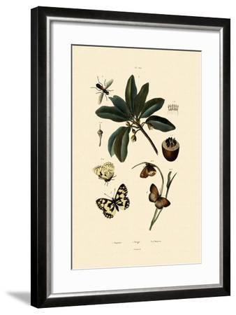Butterfly, 1833-39--Framed Giclee Print