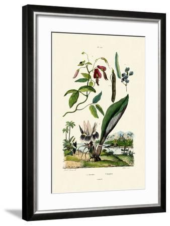 Galangal, 1833-39--Framed Giclee Print
