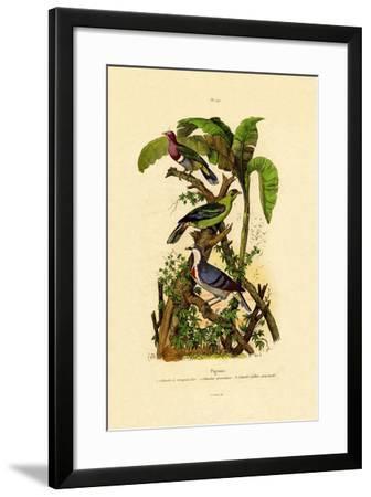 Pigeons, 1833-39--Framed Giclee Print