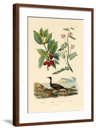 Cormorant, 1833-39--Framed Giclee Print
