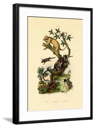 Cup Morel, 1833-39--Framed Giclee Print