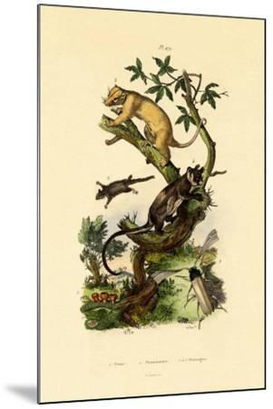 Cup Morel, 1833-39--Mounted Giclee Print