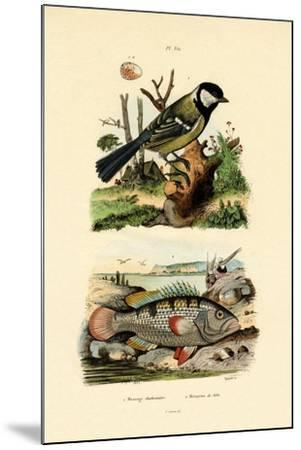 Great Tit, 1833-39--Mounted Giclee Print
