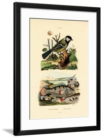 Great Tit, 1833-39--Framed Giclee Print