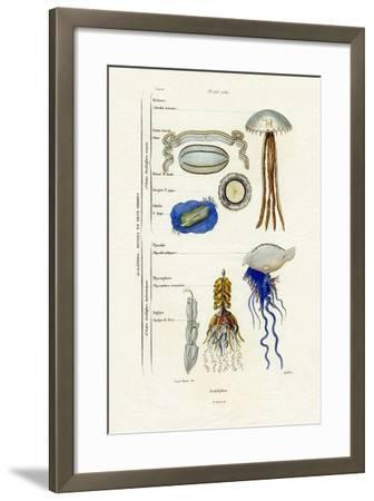 Jellyfish, 1833-39--Framed Giclee Print