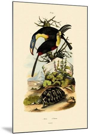 Toucans, 1833-39--Mounted Giclee Print