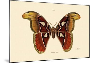 Atlas Moth, 1833-39--Mounted Giclee Print
