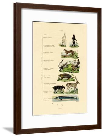 Mammalogy, 1833-39--Framed Giclee Print