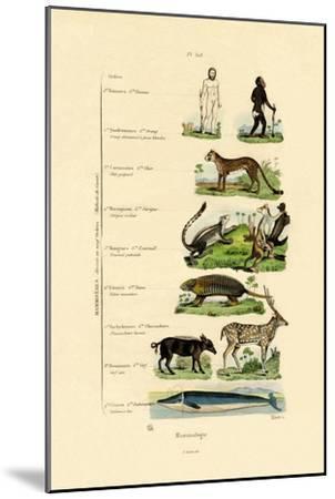 Mammalogy, 1833-39--Mounted Giclee Print