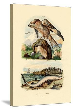 Red Kite, 1833-39--Stretched Canvas Print