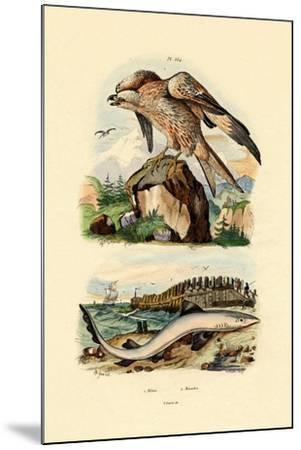 Red Kite, 1833-39--Mounted Giclee Print