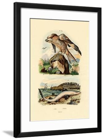 Red Kite, 1833-39--Framed Giclee Print