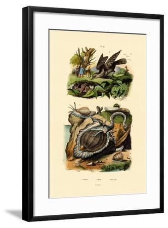 Wryneck, 1833-39--Framed Giclee Print
