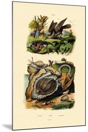 Wryneck, 1833-39--Mounted Giclee Print