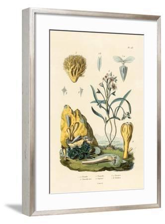 Door Snail, 1833-39--Framed Giclee Print