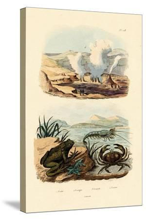Crab, 1833-39--Stretched Canvas Print