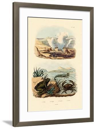 Crab, 1833-39--Framed Giclee Print
