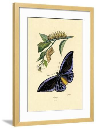 Butterflies, 1833-39--Framed Giclee Print