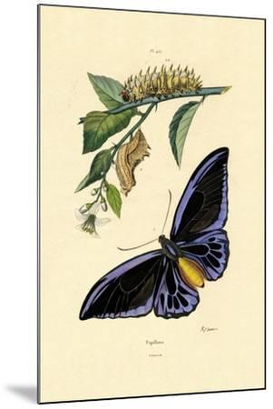 Butterflies, 1833-39--Mounted Giclee Print