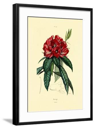 Snow Rose, 1833-39--Framed Giclee Print
