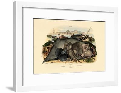 Rays, 1833-39--Framed Giclee Print