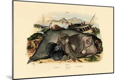 Rays, 1833-39--Mounted Giclee Print