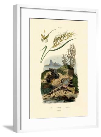 Rice, 1833-39--Framed Giclee Print
