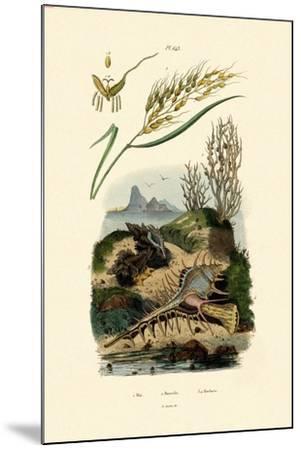 Rice, 1833-39--Mounted Giclee Print