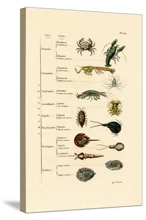 Crustaceans, 1833-39--Stretched Canvas Print