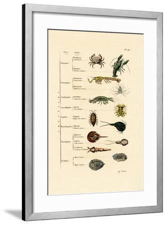 Crustaceans, 1833-39--Framed Giclee Print